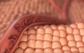 C4D教程  C4D制作红细胞血管流动动画教程