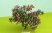 C4D模型 植物模型-粉红色的花园植物3D模型 C4D模型 含贴图 含材质
